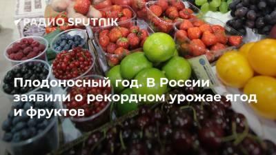 Плодоносный год. В России заявили о рекордном урожае ягод и фруктов